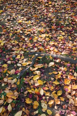 20131109_AutumnLeaves5.jpg