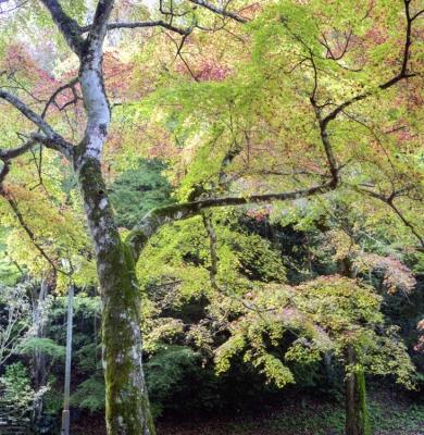 20131116_Iwakuni_Autocord_RealaAce100-4.jpg