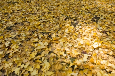 20131118_AutumnLeaves_ButtsuTemple_GRD4-2.jpg
