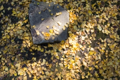 20131118_AutumnLeaves_ButtsuTemple_GRD4-3.jpg