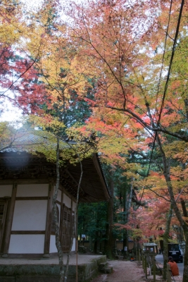 20131118_AutumnLeaves_ButtsuTemple_GRD4-8.jpg