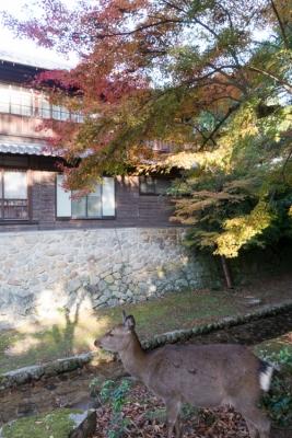 20131123_AutumnLeaves_Miyajima_GRD4-17.jpg