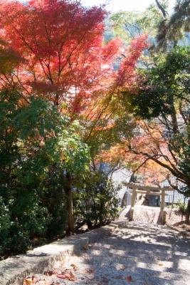 20131123_AutumnLeaves_Miyajima_GRD4-1.jpg