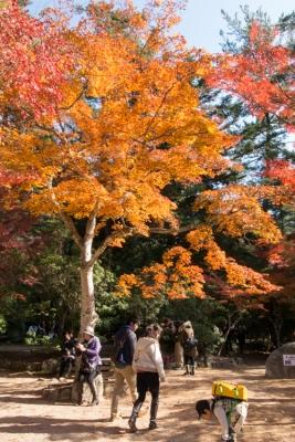 20131123_AutumnLeaves_Miyajima_GRD4-21.jpg