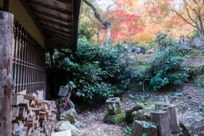 20131123_AutumnLeaves_Miyajima_GRD4-25.jpg
