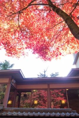 20131123_AutumnLeaves_Miyajima_GRD4-26.jpg