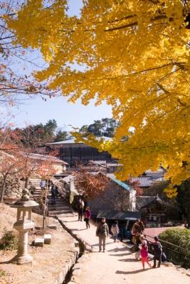 20131123_AutumnLeaves_Miyajima_GRD4-4.jpg