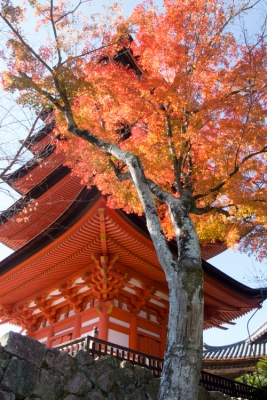 20131123_AutumnLeaves_Miyajima_GRD4-7.jpg