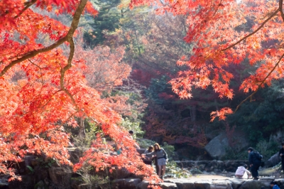 20131123_AutumnLeaves_Miyajima_GXR_Summarit50-22.jpg