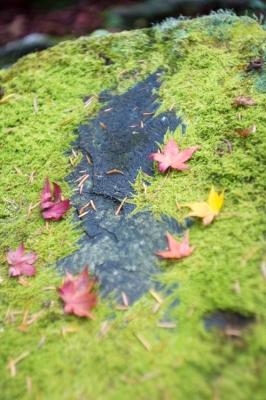 20131123_AutumnLeaves_Miyajima_GXR_Summarit50-25.jpg