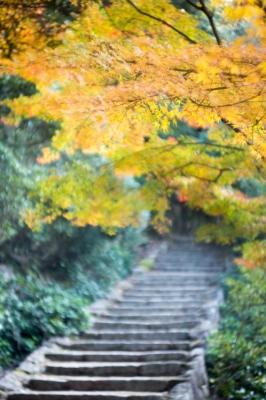 20131123_AutumnLeaves_Miyajima_GXR_Summarit50-35_2013121222155073d.jpg
