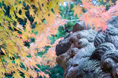 20131123_AutumnLeaves_Miyajima_GXR_Summarit50-39.jpg