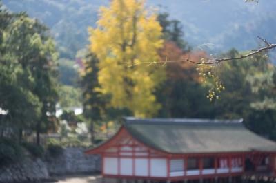 20131123_AutumnLeaves_Miyajima_GXR_Summarit50-3.jpg