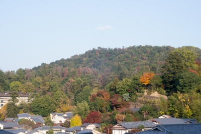 20131123_AutumnLeaves_Miyajima_GXR_Summarit50-44.jpg
