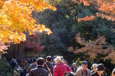 20131123_AutumnLeaves_Miyajima_GXR_Summarit50-9.jpg