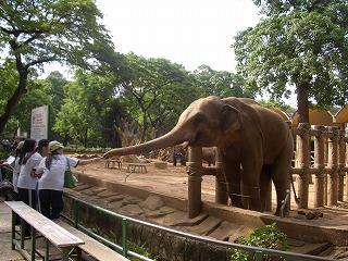 サイゴン動植物園-象1