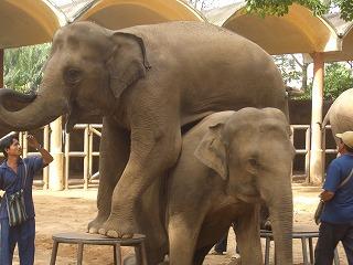 サイゴン動植物園-象4