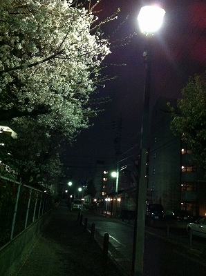 IMG_0355.jpg