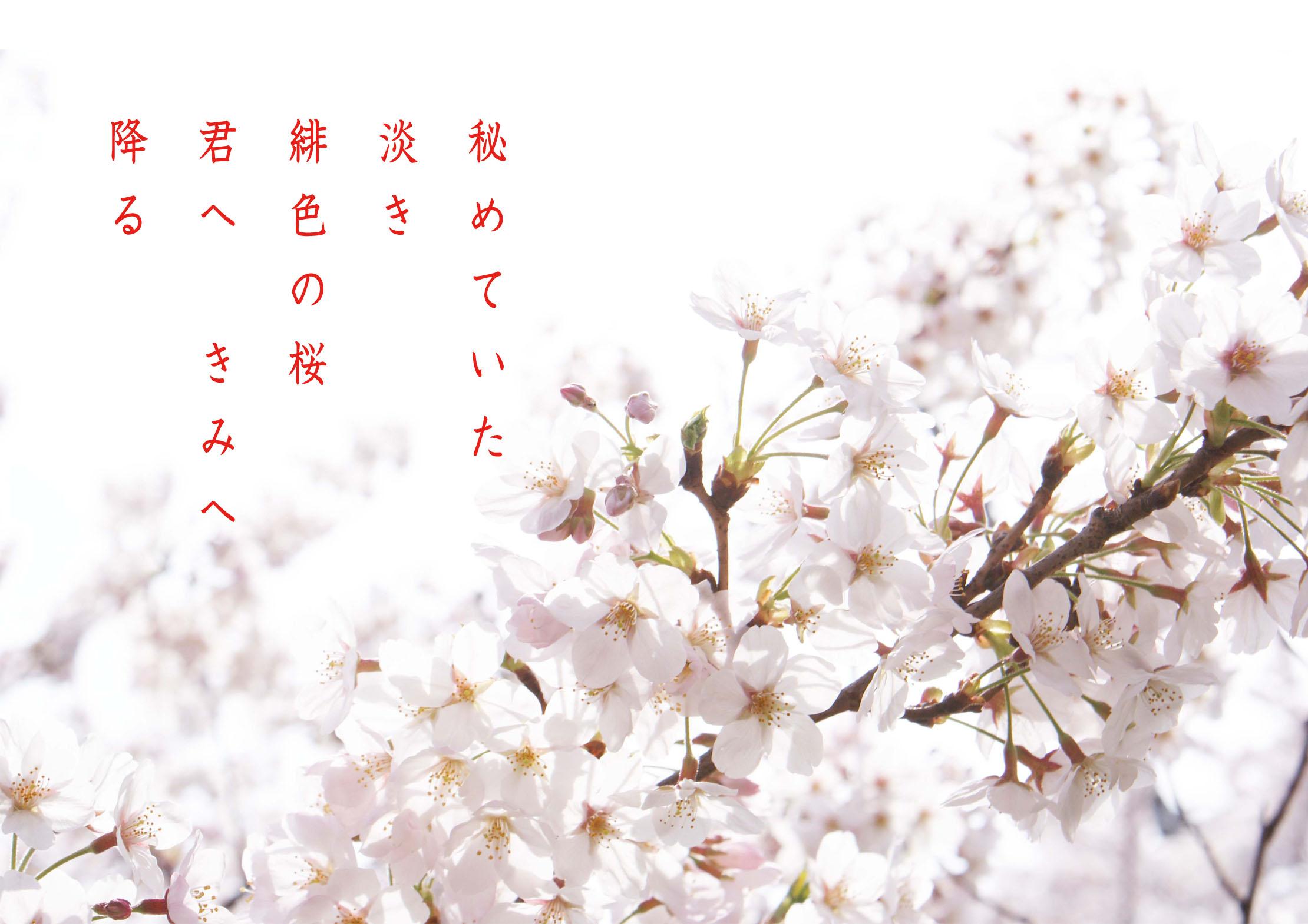 桜くるくる