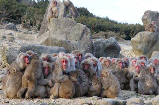 猿団子_1