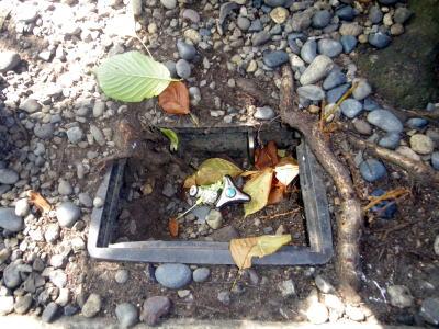 銀杏の木の横、水道栓へ根を伸ばす