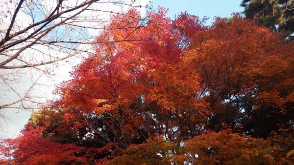 乾門近くの紅葉