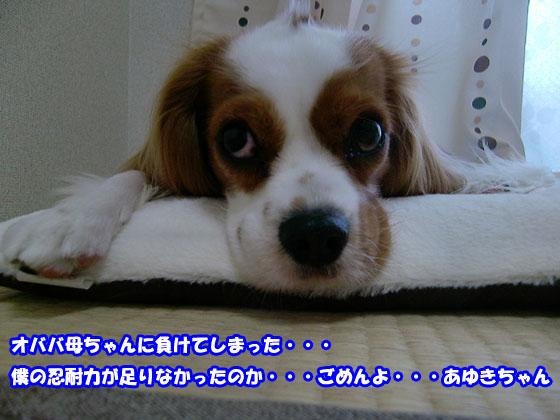 20100616_146.jpg