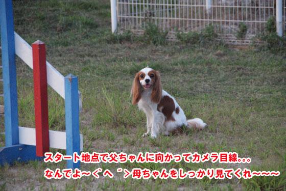 20100731_019.jpg