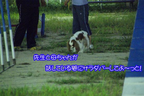 20100827_006.jpg