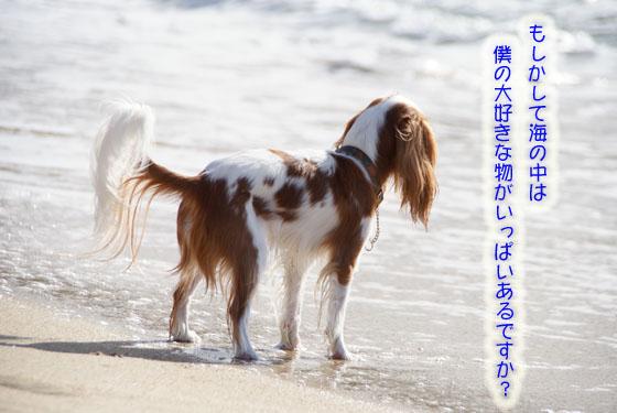 20101103_157.jpg