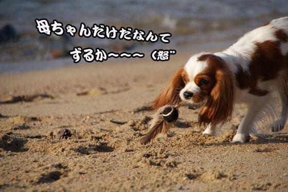 20101121_094.jpg