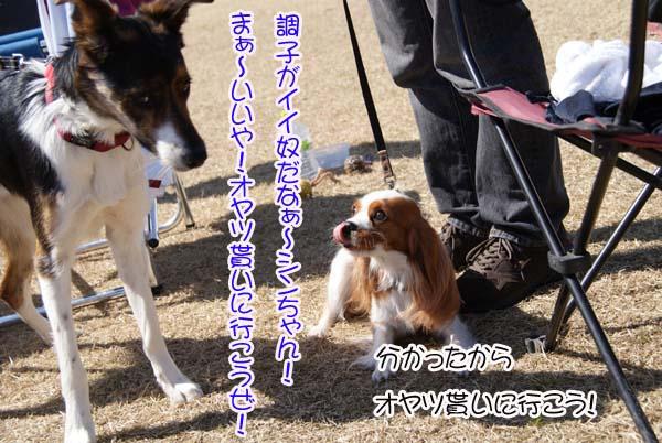 20110313_5.jpg