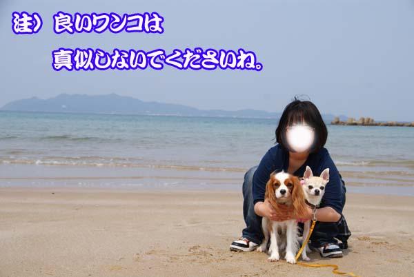 20110329_25.jpg