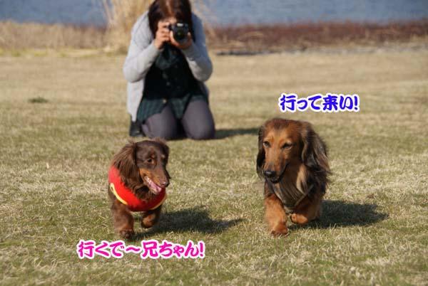 20110331_101.jpg