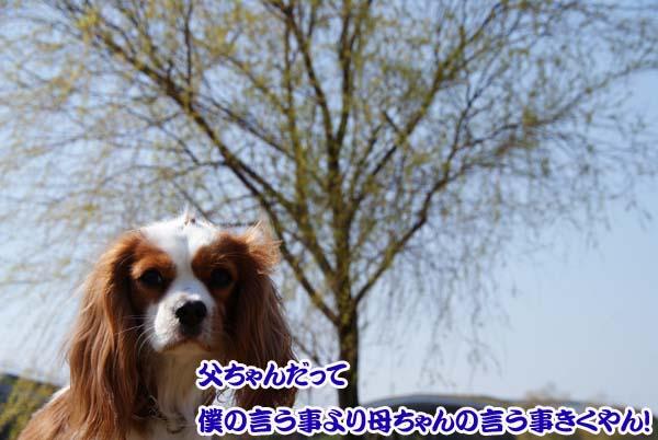 20110331_19.jpg