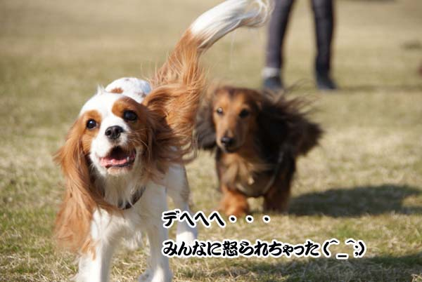 20110331_93.jpg