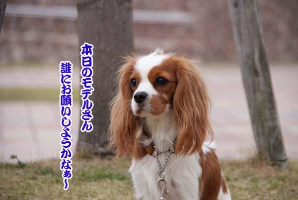 20110402_76.jpg