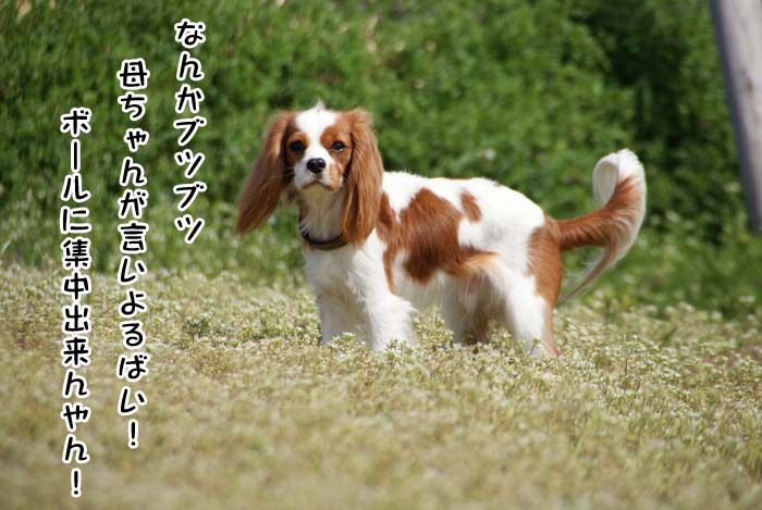 20110409_11.jpg