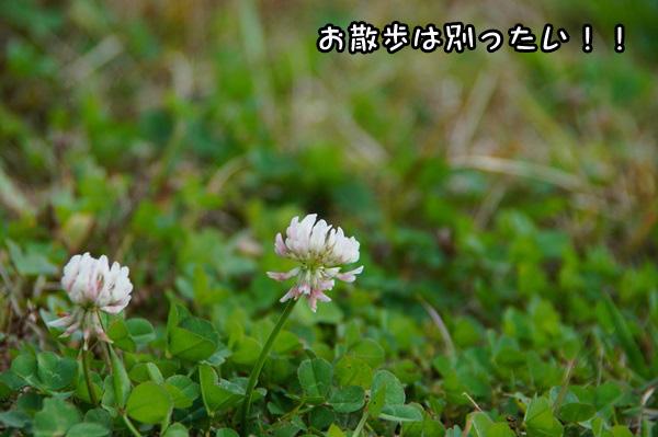 20141113_001.jpg