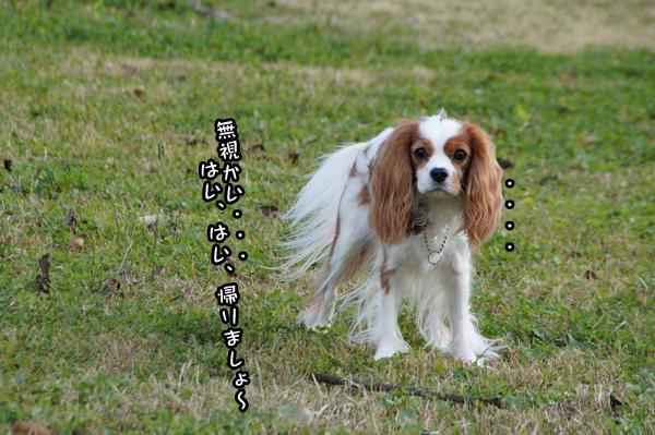 20141113_006.jpg
