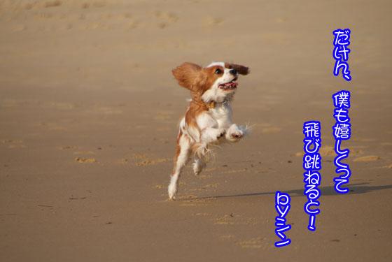 fukuokarabusutori-3.jpg