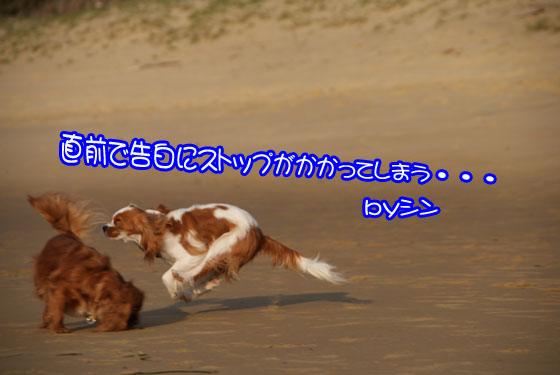 fukuokarabusutori-5(2).jpg