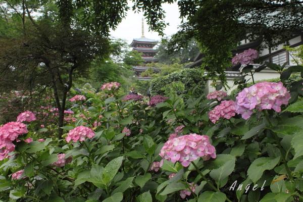 本土寺(12)