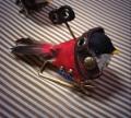 機械仕掛けの小鳥1