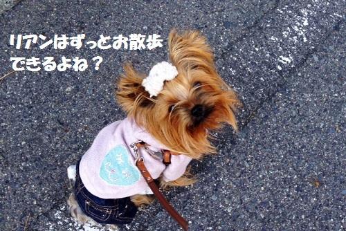 お散歩できる?