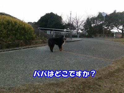 IMAG0381.jpg