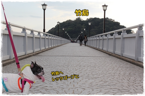 IMG_6979秋