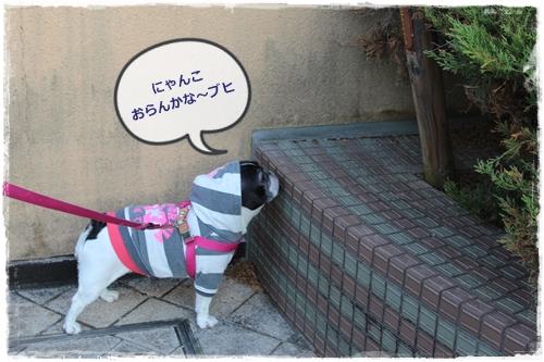 IMG_7356ふゆ