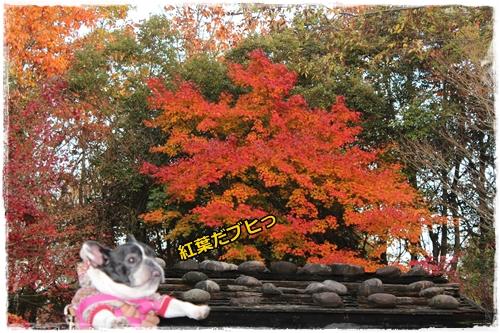 IMG_7280ふゆ