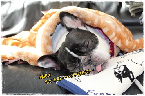 IMG_7582ぱぴこ